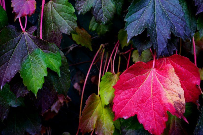 季節の移ろいを感じる色たち